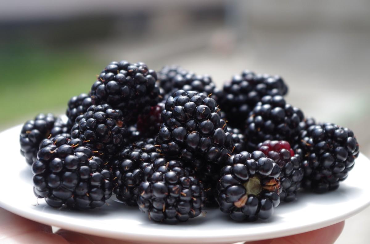 blackberries for blackberry cobbler