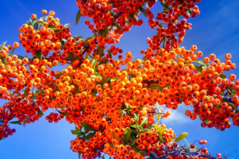 Sea Buckthorn Anti-Aging Oils and Butters for Skin Care