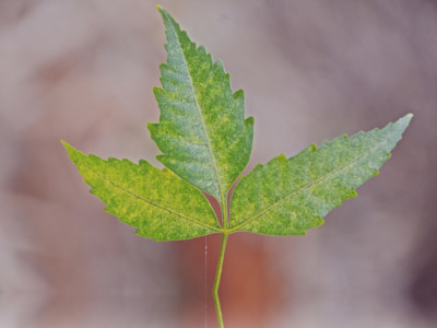 neem benefits for fighting infections